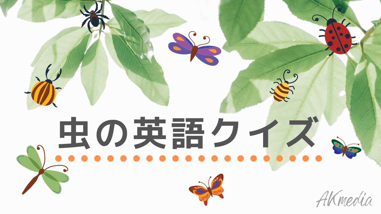 カタカナ イカ 英語