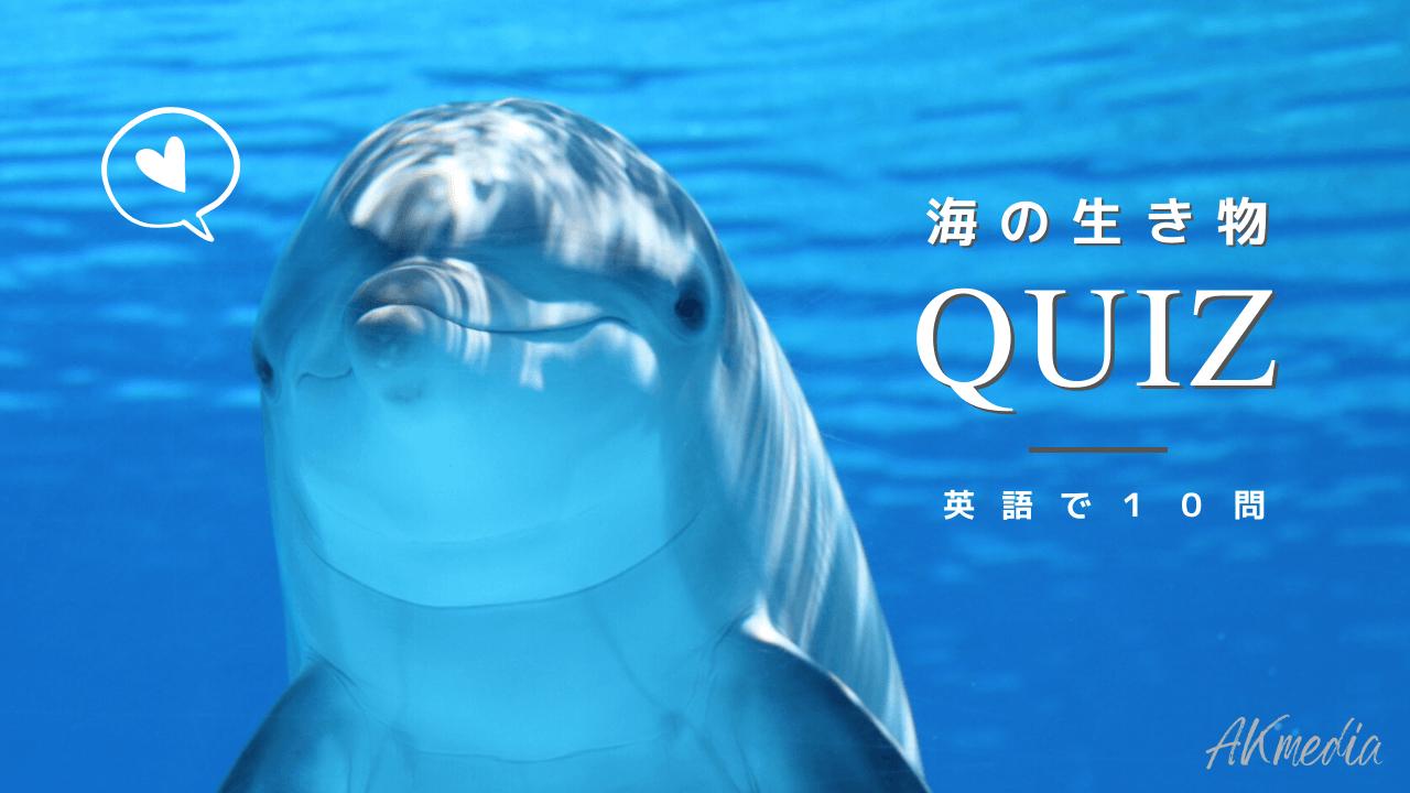 海の生き物の英語クイズ